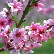 A primavera sob o olhar da inesquecível Cecília Meireles